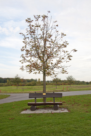 chestnut tree: A Wooden Bench and a Chestnut Tree at a Golf Course in Autumn in Germany Stock Photo