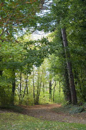 wooded path: A Path into the Forest in Bavaria, Germany