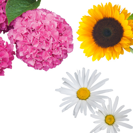 A composition of beautiful isolated flowers