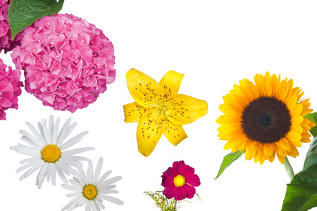 uplifting: A composition of beautiful isolated flowers
