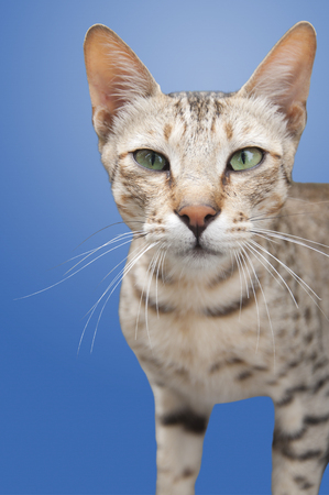 reflexive: A Feral Cat Isolated Stock Photo