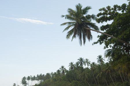 overwhelming: Palm trees against a beautiful clear sky