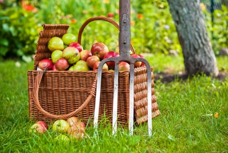 Wicker basket of fruit in garden Stock Photo