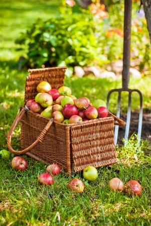 Wicker basket of fruit next to pitchfork