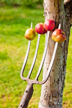 perforate: Four apples impaled on the forks