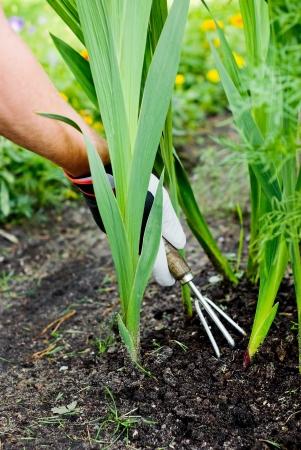 Working with small garden rake