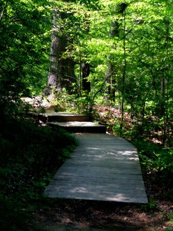 Wooded Path with Footbridge 3