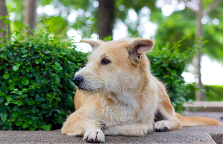 friendless: Brown dog looking away and lying in park