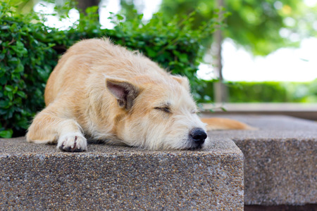 fatigued: Brown dog lying and sleeping in park Stock Photo
