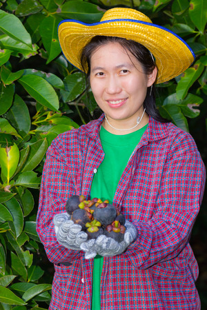 agriculturist: Asian woman (thai) agriculturist showing mangosteens on her hand, mangosteen is a tropical plant Stock Photo