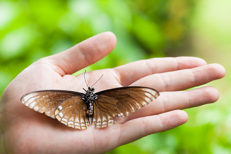 Dead butterfly in lady hand over blur green nature background, love nature, save the world, protection and preservation environmental , green earth concept