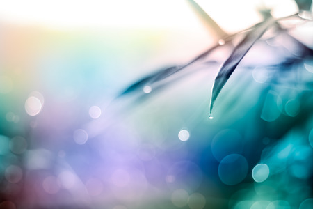 Defocused Bokeh, twinkling lights vivid color blurred bokeh abstract light spring forest background. Natural bokeh from bamboo leaf. Blur picture and soft style. Standard-Bild