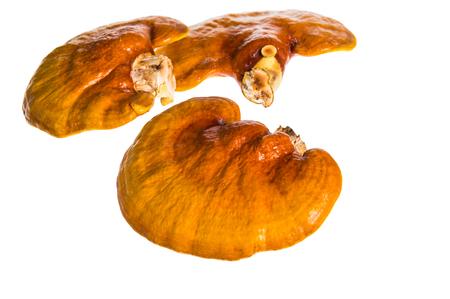 traditional medicine: Lingzhi mushroom, Ganoderma lucidum, isolated on white background, Chinese traditional medicine (nutritive value). Stock Photo