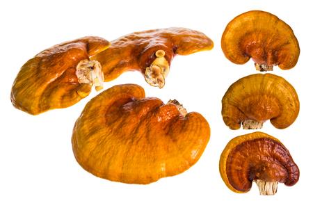lucidum: Set of Lingzhi mushroom, Ganoderma lucidum, isolated on white background, Chinese traditional medicine (nutritive value). Stock Photo