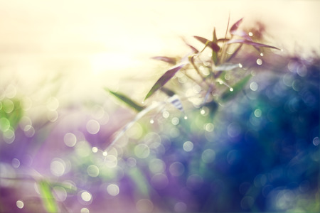 bokeh: Defocused Bokeh, twinkling lights vivid color blurred bokeh spring from bamboo leaf background. Abstract nature and soft tone color style.
