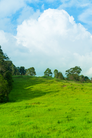 surroundings: Summer landscape in the morning at park, fresh green field against beautiful blue sky and clouds. Idyllic rural view of pretty surroundings and meadow