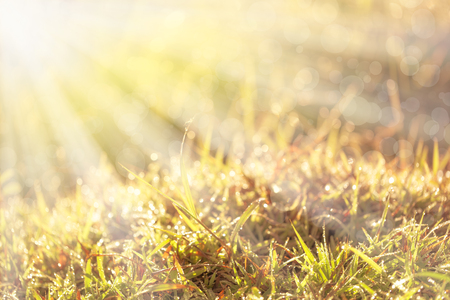 surroundings: Beautiful grass and dew with ray of lights and bokeh at morning sunrise, idyllic rural view of pretty surroundings. Outdoors.