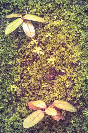 damp: Top view. Young plant growing on damp ground covered. Idyllic forest view of pretty surroundings, vintage background.