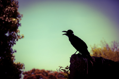 cross process: Silhouette of a crow on stone over blurred nature background. Vintage picture style. Outdoors. Cross process. Stock Photo