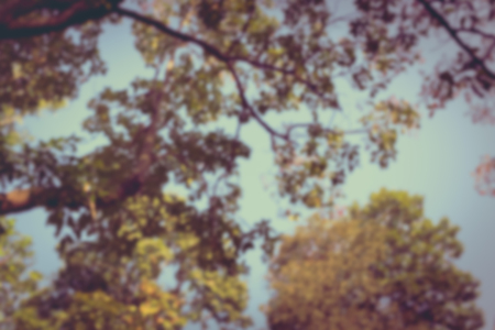 cross process: A tree branch in daylight on blurred natural background, vintage picture style.. Outdoors. Cross Process.