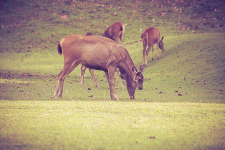 herd of deer: Herd of deer grazing on green grass in summer forest on natural background, tranquil scene. Stock Photo