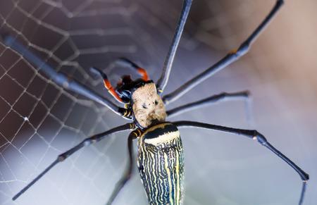 Closeup - Spider on spiderweb (cobweb) against nature  bokeh background. Outdoors. Macro. Stock Photo
