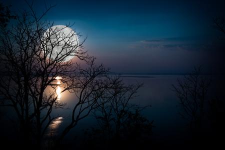 静かな湖の空に対してツリー。森と美しい月の出のシルエット、明るい満月は素敵な写真になります。背景として自然の用の美。アウトドア。