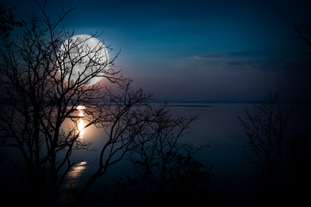Tree against sky over tranquil lake. Silhouettes of woods and beautiful moonrise, bright full moon would make a nice picture. Beauty of nature use as background. Outdoors. Reklamní fotografie