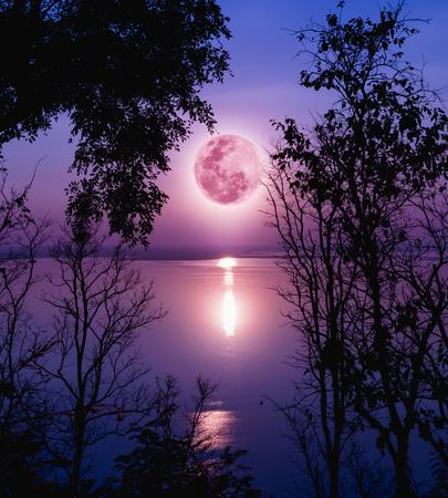 고요한 호수 위에 자주색 하늘을 트리. 숲과 아름다운 moonrise, 밝은 보름달의 실루엣은 멋진 그림을 만들 것입니다. 배경으로 자연의 아름다움을 사용 스톡 콘텐츠
