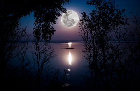 Tree against sky over tranquil lake. Silhouettes of woods and beautiful moonrise, bright full moon would make a nice picture. Beauty of nature use as background. Outdoors. Banque d'images