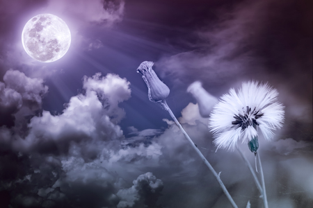 nightly: Attractive photo of flowers with full moon and moonlight in nightly sky. Beautiful nature use as a great background. Vintage tone.