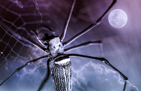 nightly: Halloween background. Closeup spider on spiderweb and beautiful nightly sky with full moon. The moon taken with my own camera, no NASA images used. Outdoors. Macro. Stock Photo