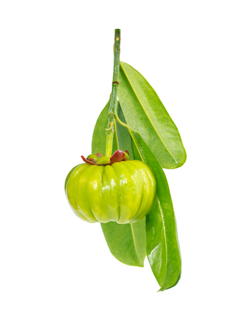 citric: Garcinia cambogia fresh fruit, isolated on white. Garcinia atroviridis is a spice plants and high vitamin C and hydroxy citric acids (HCA) for diet and good health. Stock Photo