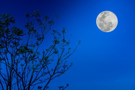 not full: Silhouette the branches of trees against blue sky and beautiful full moon at night. Beauty of nature use as background. Outdoors. The moon were NOT furnished by NASA. Stock Photo