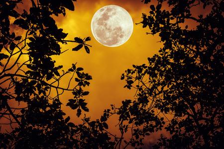 Silhouette i rami degli alberi contro il cielo notturno arancione. Bellissimo paesaggio con luminosa luna piena. All'aperto. La luna NON è stata fornita dalla NASA.