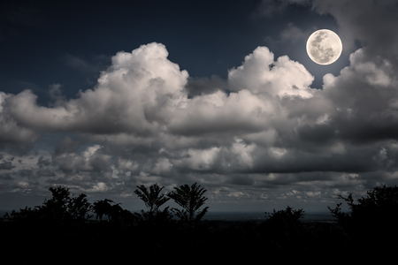 moonbeam: Silhouettes of tree and nighttime sky with clouds, bright full moon would make a great background. Beauty of nature. The moon taken with my own camera, no NASA images used.
