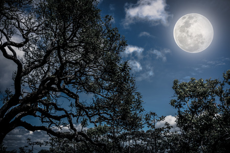 not full: Silhouette of the branches of trees against sky with bright full moon, beautiful nature background in the night sky. Outdoors. The moon were NOT furnished by NASA. Stock Photo