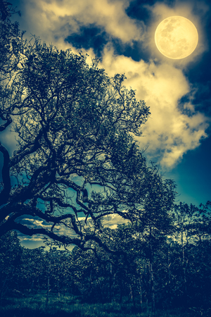 not full: Silhouette of the branches of trees against sky with bright full moon, beautiful nature background in the night sky. Outdoors. Vintage and cross process tone. The moon were NOT furnished by NASA. Stock Photo