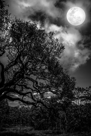 Silhouette of the branches of trees against sky with bright full moon, pretty nature background in the night sky. Black and white tone. Outdoors. The moon were NOT furnished by NASA.