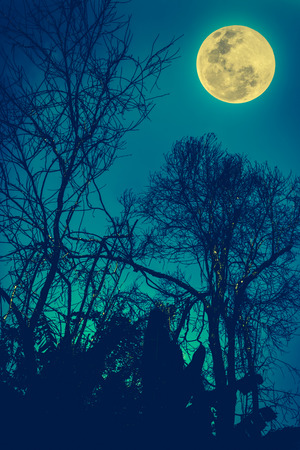 full moon effect: Silhouettes of dry tree against night sky and bright moon, beautiful landscape with full moon in the night sky. Outdoors. The moon were NOT furnished by NASA. Cross process and vintage tone effect.