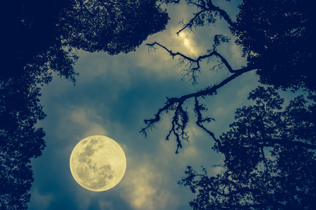 full moon effect: Silhouette of the branches of trees against the night sky in a full moon. Beautiful landscape with bright moon in the night sky. Outdoors. Vintage tone effect. The moon were NOT furnished by NASA.