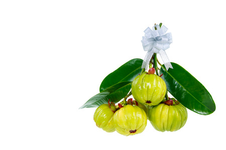 citric: Bunch of garcinia cambogia fresh fruit with ribbon, isolated on white. Garcinia atroviridis is a spice plants and high vitamin C and hydroxy citric acids (HCA) for diet and good health. Stock Photo