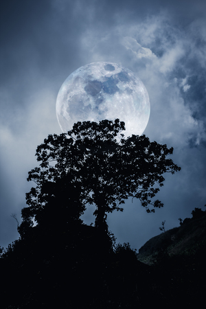 over black: Silhouettes of tree against dark blue sky over tranquil sea. Nighttime sky and large moon. Full moon behind trees. Black and white tone effect. The moon were NOT furnished by NASA. Stock Photo