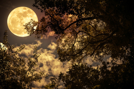 Silhouette of the branches of trees against night sky with full moon. Beautiful landscape with bright moon. Outdoors. Vintage tone effect. The moon were NOT furnished by NASA.