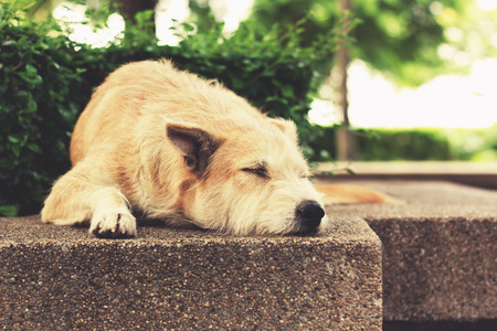 friendless: Stray dog sleeping at park. The dog relaxing with closed eyes. Vintage effect tone.