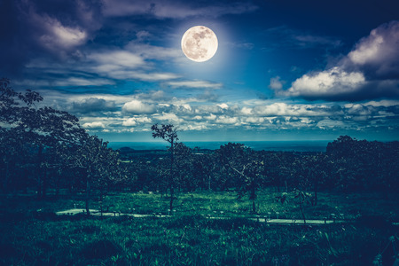 Silhouettes of trees against night sky with clouds and bright full moon over tranquil nature on dark tone from national park. Beauty of nature. Cross process.The moon were NOT furnished by NASA. Stock Photo