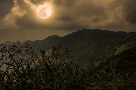 Mountain peaks. Silhouettes of trees with night sky and beautiful full moon over tranquil nature on dark tone. Beauty landscape at nighttime. Sepia color. The moon were NOT furnished by NASA.