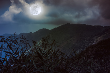 Mountain peaks. Silhouettes of trees with night sky and beautiful full moon over tranquil nature on dark tone. Beauty landscape at nighttime. Vintage effect tone. The moon were NOT furnished by NASA. Stock Photo