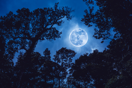 Silhouette the branches of trees against blue sky with full moon on tranquil nature. Beautiful landscape with large moon, outdoors at nighttime. The moon were NOT furnished by NASA. Stock Photo