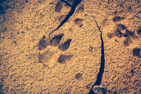 깨진 된 땅에서 개 발자국입니다. 마른 땅에서 동물 발자국. 낮에는 야외 활동. 자연 배경입니다. 비 네트 스타일. 빈티지 효과 톤입니다. 스톡 콘텐츠 - 76985928